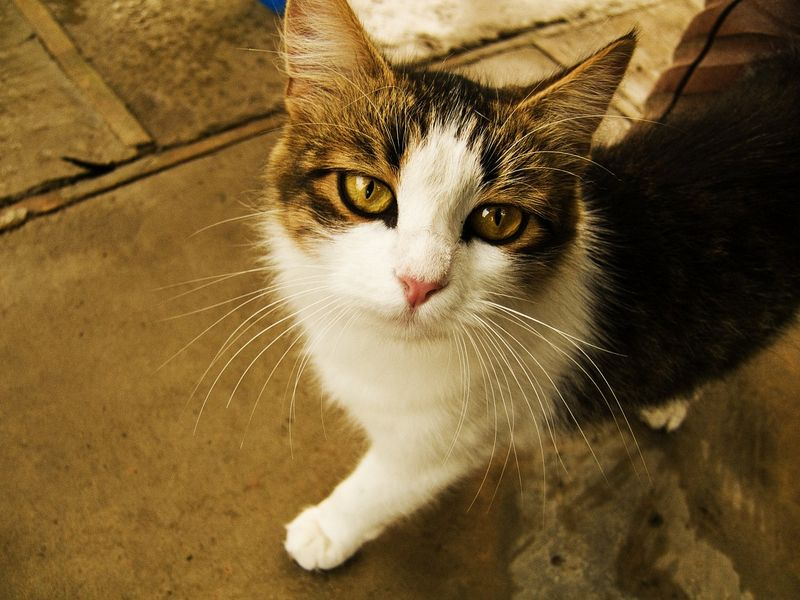 cat4-005.jpg