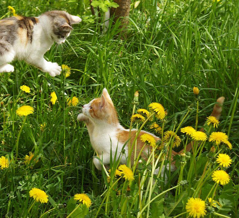 cat4-007.jpg