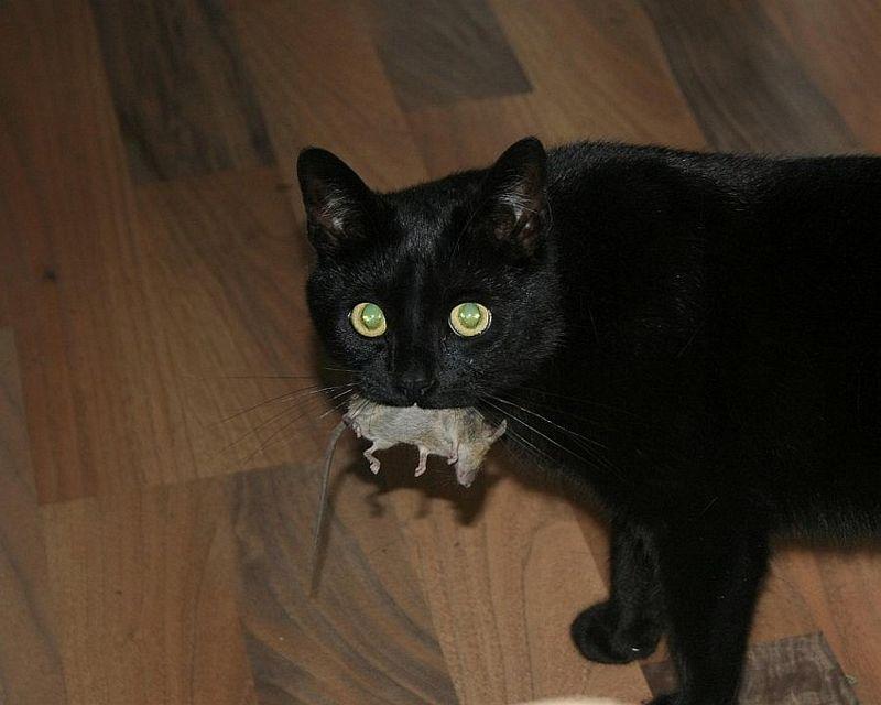 cat4-009.jpg