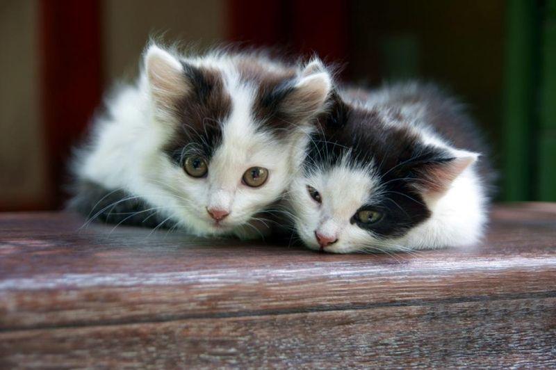 cat4-010.jpg