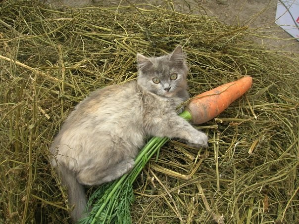 cat5-001.jpg