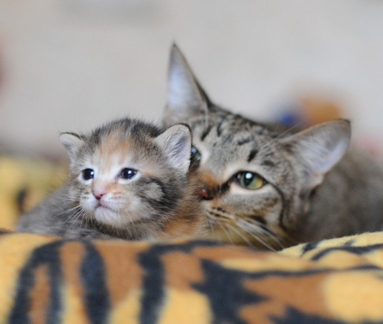 cat5-002.jpg