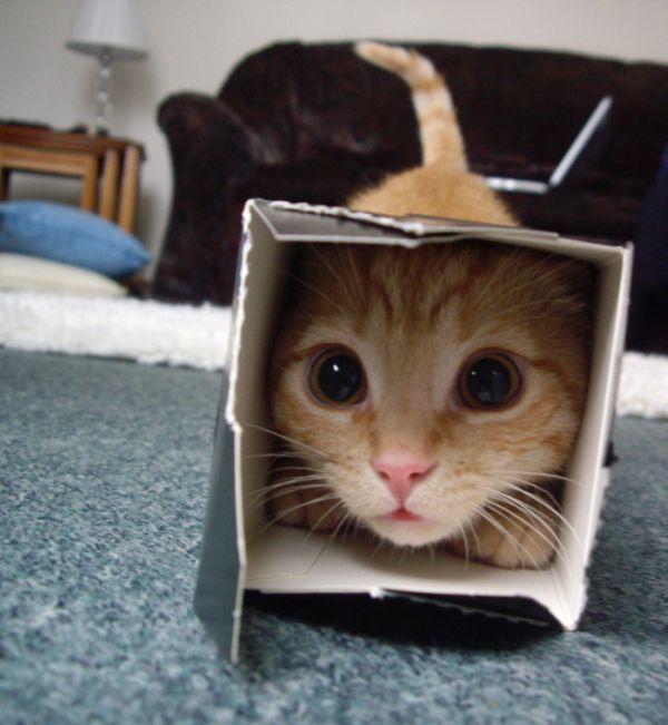 cat5-005.jpg