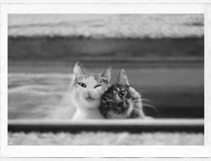 cat5-007.jpg
