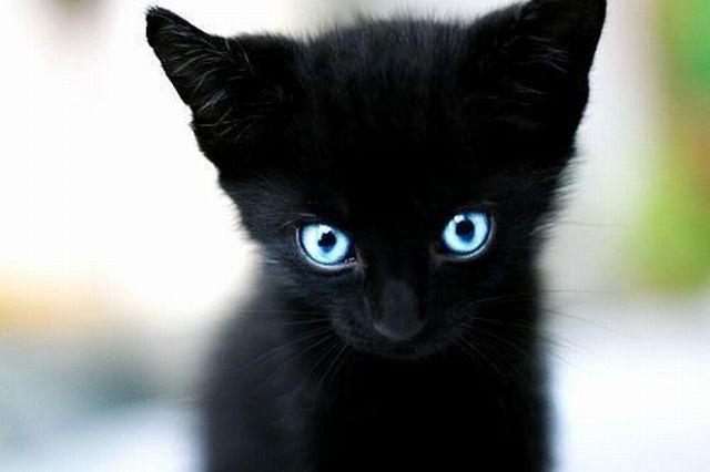 cat5-008.jpg