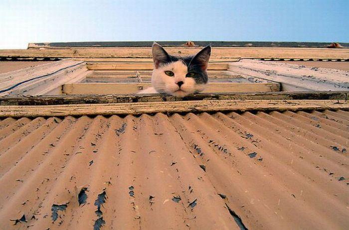 cat5-010.jpg
