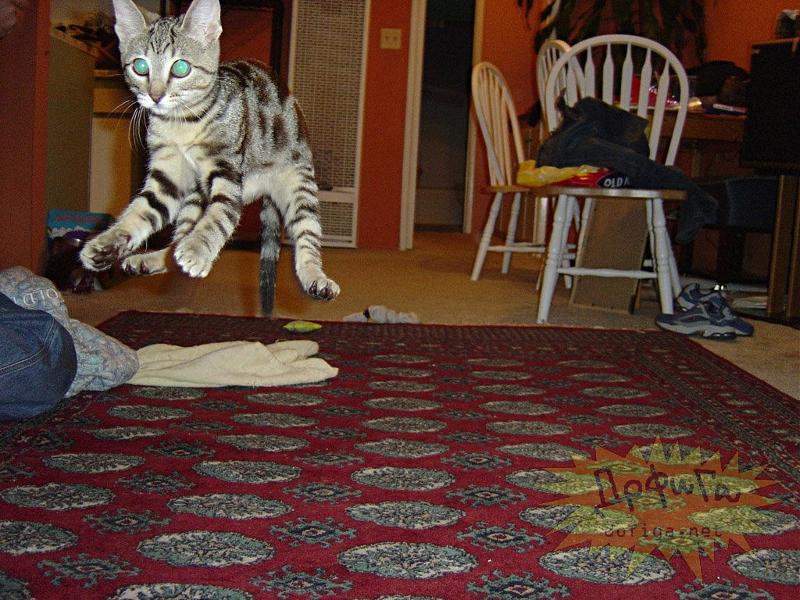 cat6-006.jpg