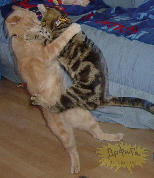 cat6-007.jpg