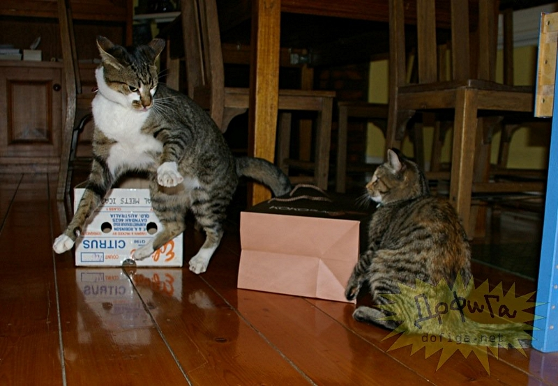 cat6-008.jpg