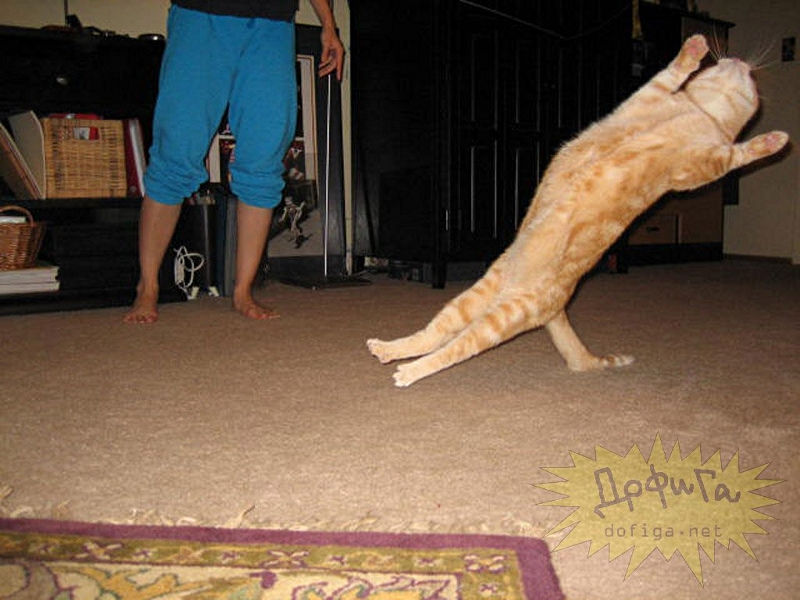 cat6-009.jpg