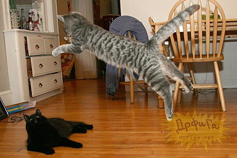 cat6-010.jpg