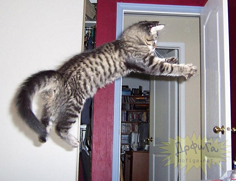 cat6-012.jpg
