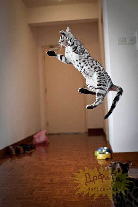 cat6-014.jpg