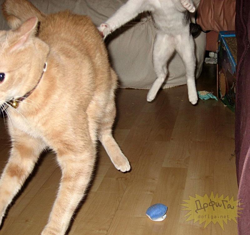cat6-016.jpg