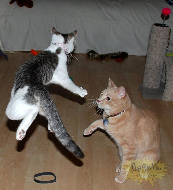 cat6-018.jpg