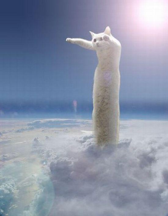 cat7-003.jpg