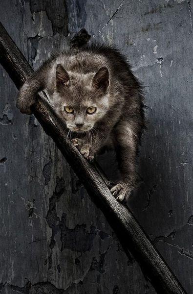 picture-cat01-001.jpg