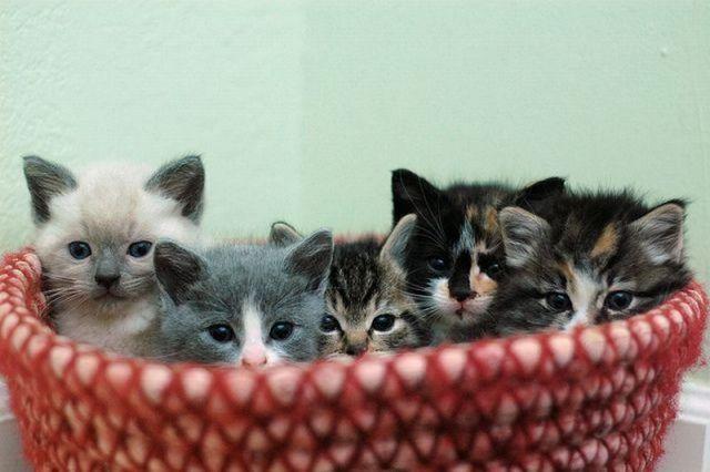 picture-cat01-002.jpg