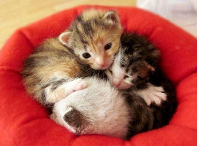 picture-cat01-003.jpg