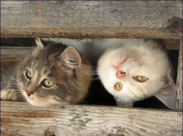 picture-cat01-005.jpg