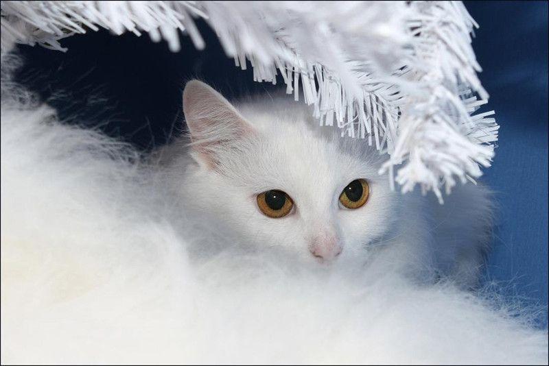 picture-cat01-006.jpg