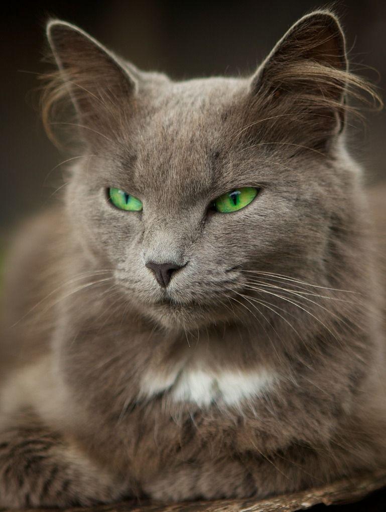picture-cat01-007.jpg