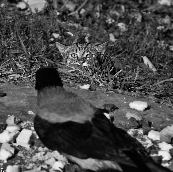 picture-cat01-008.jpg