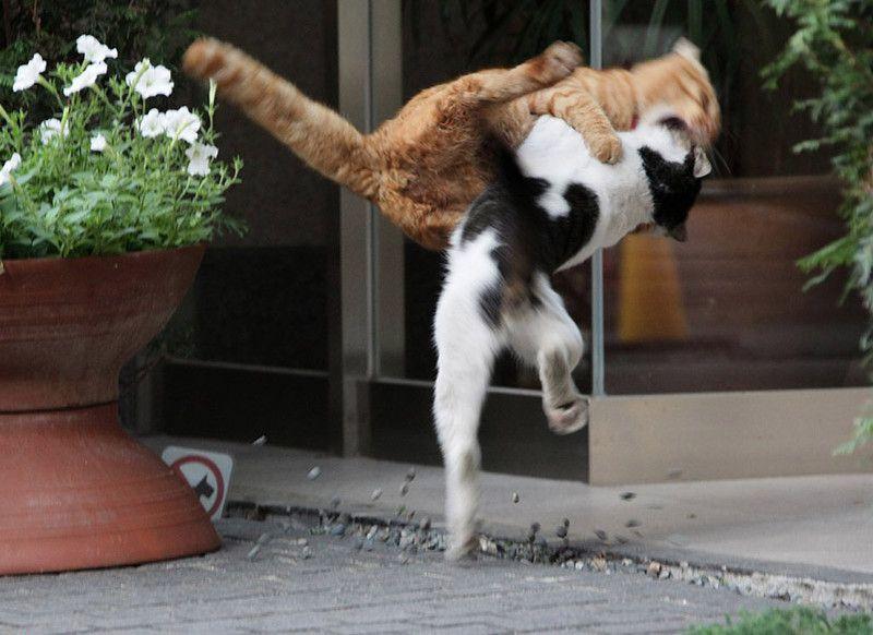 picture-cat01-009.jpg