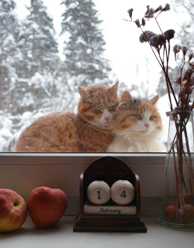 picture-cat01-012.jpg