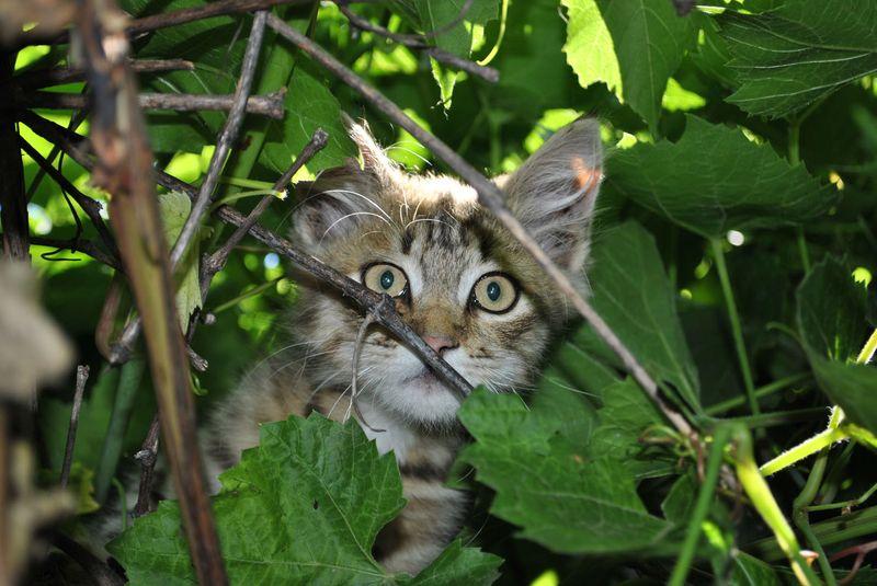 picture-cat01-013.jpg