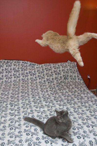 picture-cat01-014.jpg