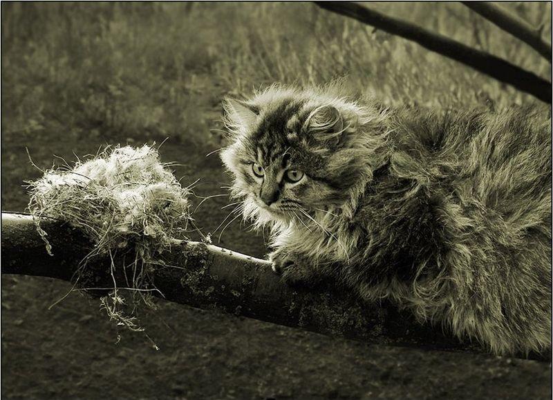 picture-cat01-015.jpg