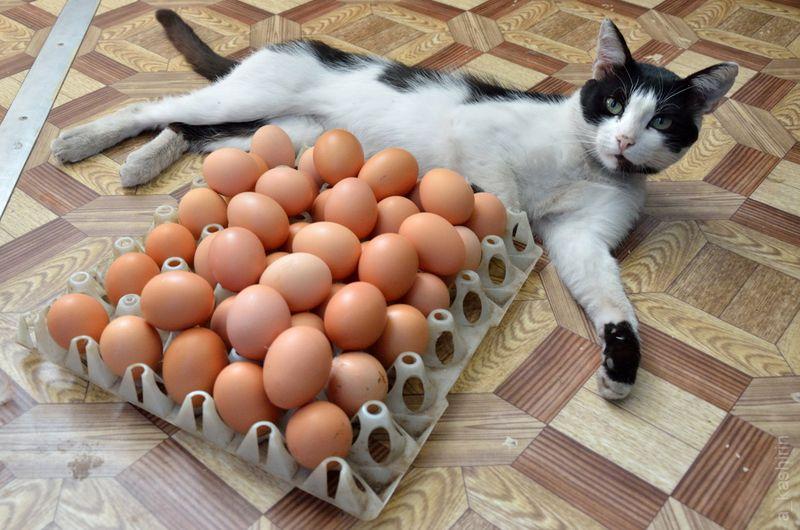 picture-cat01-016.jpg