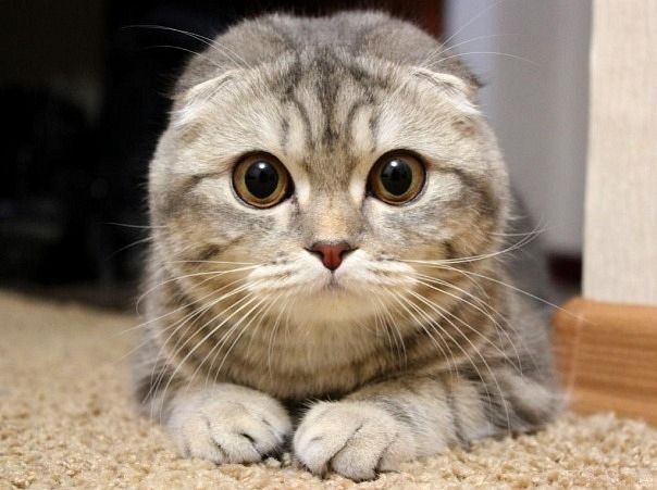 picture-cat01-017.jpg