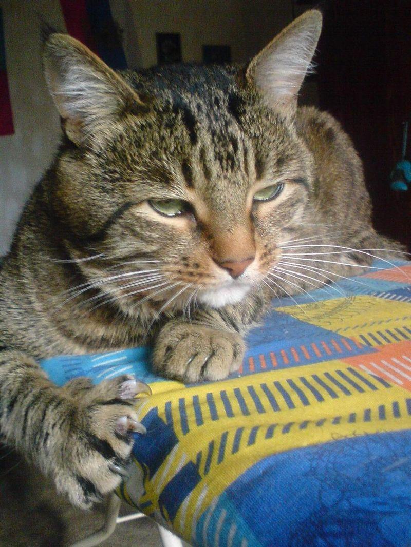 picture-cat01-019.jpg